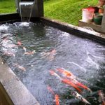 kolam ikan biasa