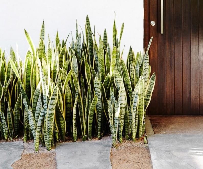 tanaman tahan panas